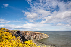 Gorse at Cullernose Point Stock Images