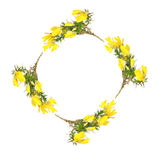 Gorse Flower Garland. Gorse flowers forming a circular garland, creating  a border, over white background Stock Photos