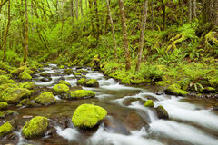 Gorton Creek in the Columbia River Gorge, Oregon, USA. Gorton Creek through lush rainforest in the Columbia River Gorge, Oregon, USA royalty free stock photo