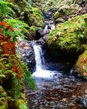 Gorton Creek. Tropicals in the Columbia river gorge Royalty Free Stock Images