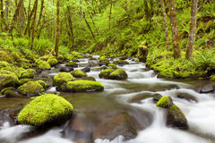Gorton-Nebenfluss in der Columbia River Schlucht, Oregon, USA Lizenzfreies Stockfoto