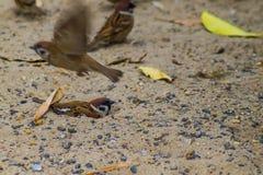 Gorup themselves w piasku dla grzać z piaska tłem wróbel próba inset obrazy royalty free