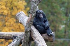 Goryl w jesieni obsiadaniu na belach zdjęcia royalty free