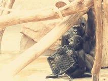 Goryl z dzieckiem zdjęcia royalty free