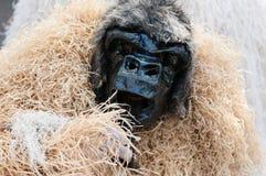 Goryla kostium w karnawale Santo Domingo 2015 i maska Zdjęcie Stock