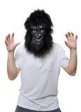 Goryla mężczyzna Fotografia Royalty Free