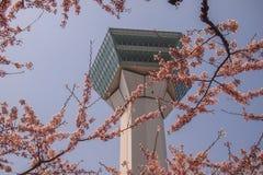 Goryokaku塔,函馆,北海道,日本在春天 使用在前景的充分开花的樱花 免版税图库摄影