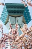 Goryokaku塔,函馆,北海道,日本在春天 使用在前景的充分开花的樱花 免版税库存照片