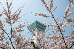 Goryokaku塔,函馆,北海道,日本在春天 使用在前景的充分开花的樱花 免版税库存图片