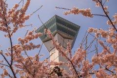 Goryokaku塔,函馆,北海道,日本 使用在前景的充分开花的樱花 免版税库存照片