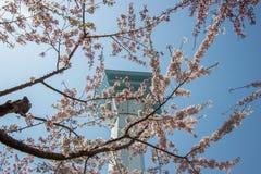 Goryokaku塔,函馆,北海道,日本 使用在前景的充分开花的樱花 免版税库存图片
