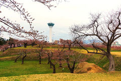 Goryokaku Tower with cherry blossom, Hakodate Stock Images