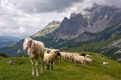 Gosaukamm, Austria Royalty Free Stock Images