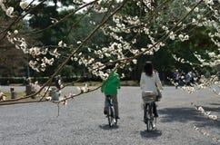 Goshopark in Kyoto, de pruim bloeiende lente Stock Afbeelding