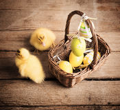 Goslings with easter eggs Stock Photography
