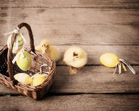 Goslings with  eggs on wooden background Stock Photos