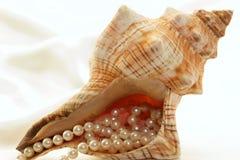 gospodarstwa konchy perły? zdjęcie stock