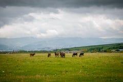 gospodarstwa rolne zielenieją hdr końskich wizerunku paśniki Obrazy Royalty Free