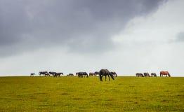 gospodarstwa rolne zielenieją hdr końskich wizerunku paśniki Fotografia Royalty Free