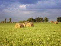 gospodarstwo rolne Obrazy Royalty Free