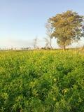 Gospodarstwo rolne i drzewo obraz royalty free