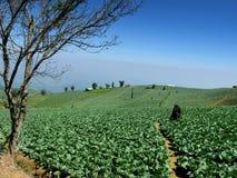 Gospodarstwo rolne na wzgórzu Obraz Stock
