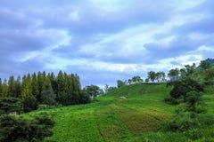Gospodarstwo rolne na wzgórzu z przeważny chmurnym zdjęcie royalty free