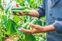 Gospodarstwo rolne, rolnik, rolnictwo fotografia stock