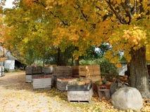 Gospodarstwo rolne w autum afternoo Zdjęcie Royalty Free