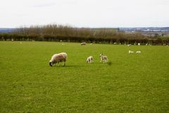Gospodarstwo rolne w Bedfordshire Fotografia Royalty Free
