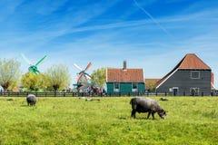 Gospodarstwo rolne w holandiach Holenderski wiatraczek w świeżym Rolnym polu Zdjęcie Stock