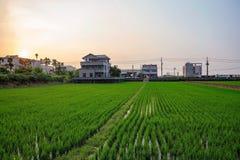 Gospodarstwo rolne w Nantou Tajwan zdjęcie royalty free