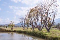 gospodarstwo rolne w Pai z niebieskim niebem Obraz Stock