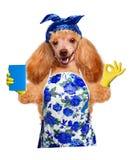 Gospodyni domowa pies Zdjęcie Stock