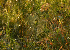Gossamer on the grass Royalty Free Stock Images