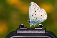 Gossamer-winged butterfly sitting on a camera Royalty Free Stock Photos