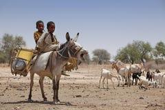 Gosses sur un âne en Afrique Photos libres de droits