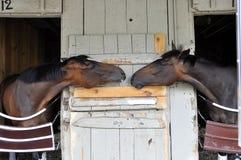 Gossip del Backstretch al porto del cavallo, Saratoga immagini stock libere da diritti
