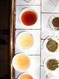 Gosto do chá em uma fábrica do chá fotos de stock