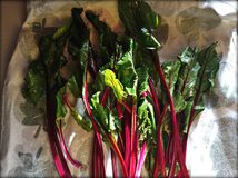 We got the beets. Glorious Beet greens Royalty Free Stock Photos