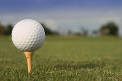 Got golf?!?. Close-up of a golf ball on a tee on the green Stock Photography