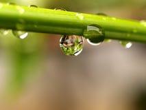 Gota 04 da folha/água da planta Foto de Stock