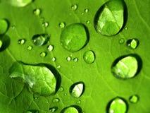 Gota 06 da folha/água da planta Foto de Stock Royalty Free