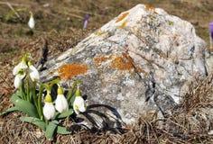 Gota alpina da neve Imagem de Stock