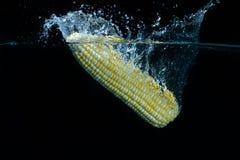 Gota amarela fresca do milho na água Foto de Stock