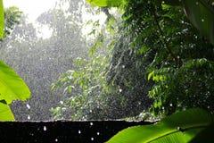 Gota chuvosa em árvores Fotos de Stock Royalty Free