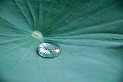 Gota clara del agua en la hoja Fotografía de archivo