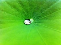 Gota congelada del agua Imagen de archivo libre de regalías