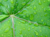Gota da água Imagem de Stock