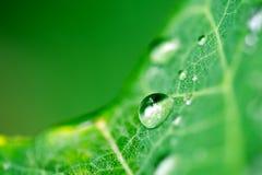 Gota da água Imagens de Stock